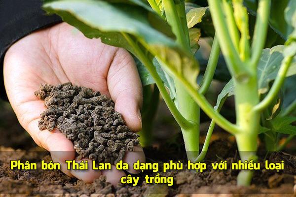 Phân bón Thái Lan đa dạng phù hợp với nhiều loại cây trồng